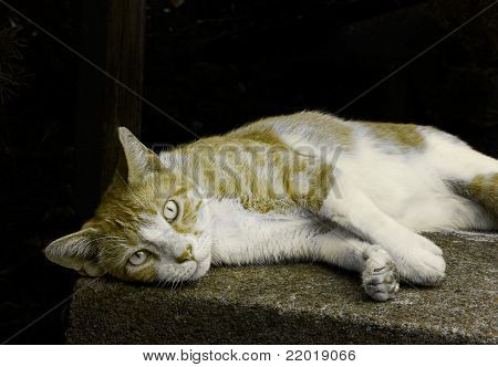 cat lying on step looking at you