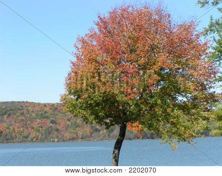 Colorful Tree At A Lake