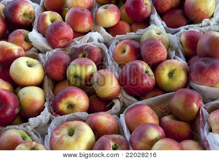 Cartons of MacIntosh Apples