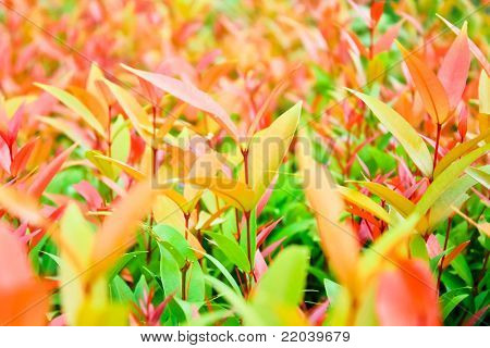 Ornamental Plants Roadside