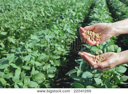 Landwirtschaftliche Konzept