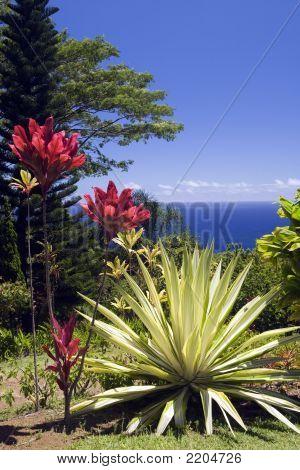 Arboretum And Botanical Garden Overlooking The Pacific Ocean