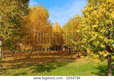 Autumn Scene Horizontal