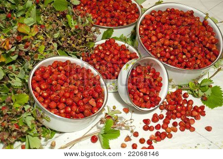 Wood Year Wild Strawberry On A Table