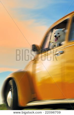 Dog on the yellow car