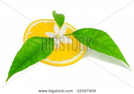Orange, Flower With Leaves And A Slice