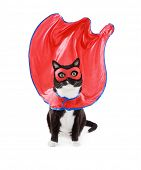 Super hero black and White tuxedo cat wearing mask and cape poster
