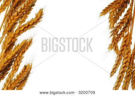 Wheat Frame