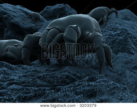 Mite Illustration