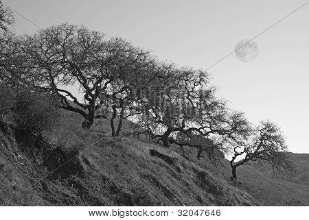 Trees On Hillside With Full Moon