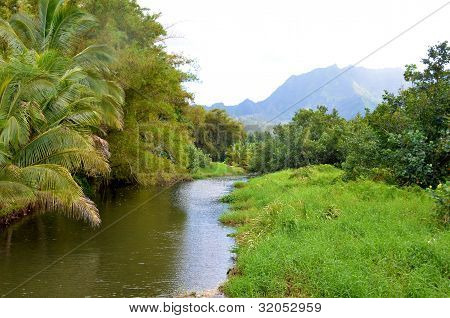 Tranquil Stream In Lush Rainforest
