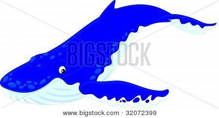 Bult-backed walvis