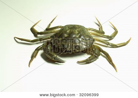 crab over white