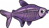 picture of x-ray fish  - cartoon vector illustration of x - JPG