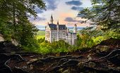 Fairy-tale Neuschwanstein Castle in Bavaria, Germany. View from the bluff with tree roots at famous  poster