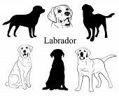 Labrador Set. Collection Of Pedigree Dogs. Black White Labrador Dog Illustration. Vector Drawing Of  poster