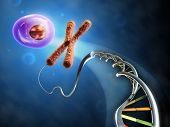 foto of biotech  - Illustration showing the formation of an animal cell from dna and chromosomes - JPG