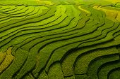 Paddy Rice Terraces, Agricultural Fields In Countryside Or Rural Area Of Mu Cang Chai, Yen Bai, Moun poster