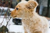 A Cute, Fluffy, Ginger Puppy Is Playing In The Snow. Beautiful Eyes Of A Red Fluffy Puppy. Games In  poster