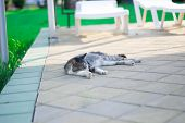 Cat Lying On Streetcat Lies On The Street. Resting In The Sun poster
