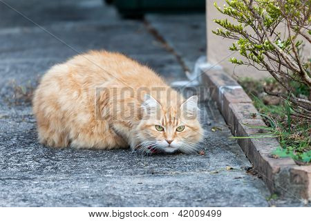 Wary Ginger Tabby Cat On The Sidewalk