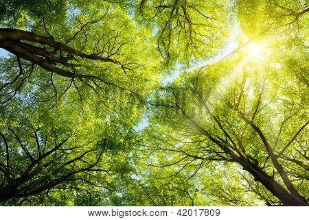 Sun Shining Through Treetops