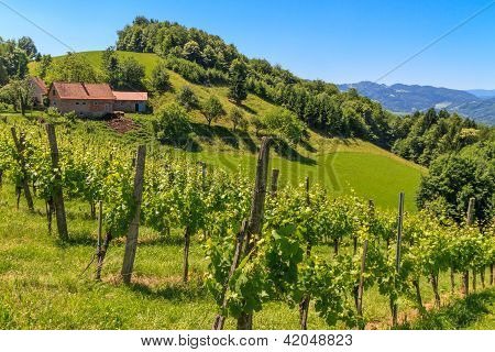 Styrian Tuscany Vineyard Near Leutschach, Styria, Austria