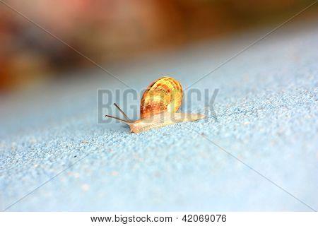 Single Snail Crawling On A Wall