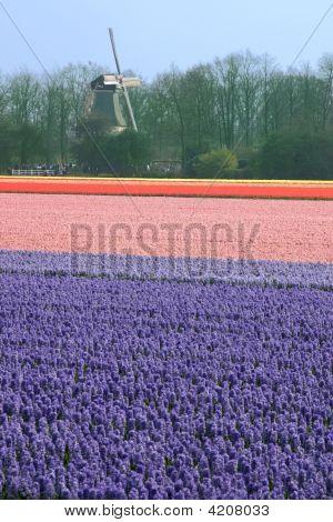 Flowerfield