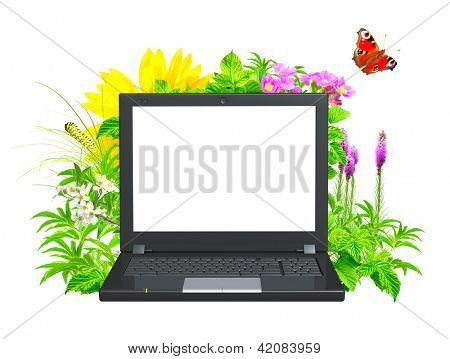 Laptop and green leaves. Isolated over white
