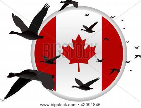 Geese flying past a Canadian Flag