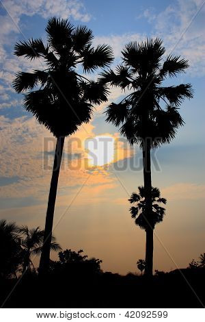 Twin Palm Trees At Sunset