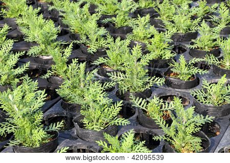 Small plants in greenhouse nursery
