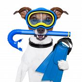 stock photo of rubber mask  - scuba dog with tins snorkel and goggles - JPG