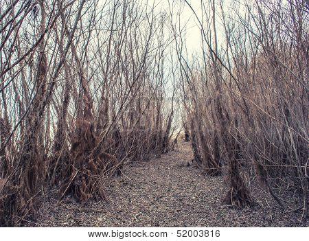 Unfriendly way vegetation along river
