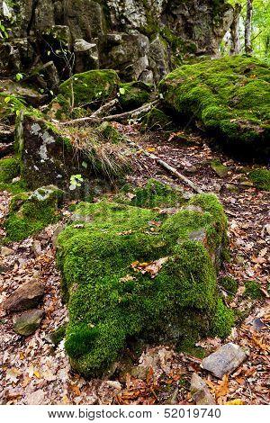 Moss-grown Boulders In Caucasus Mountains