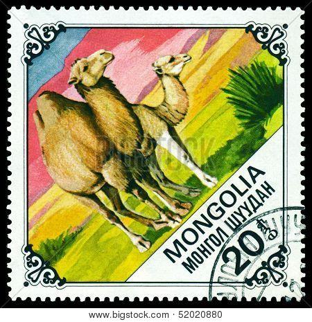 Vintage  Postage Stamp.  Camel And Calf.