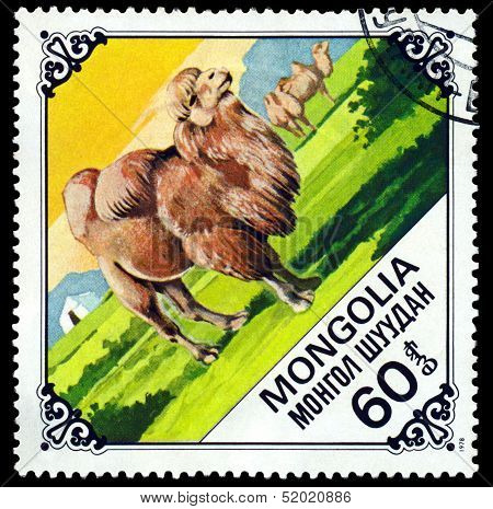 Vintage  Postage Stamp.  Old  Camel.