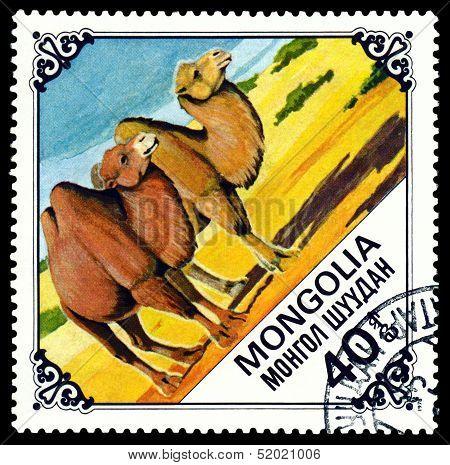 Vintage  Postage Stamp.  Two Camels.