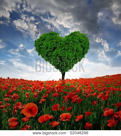 poppy field with tree from the shape heart in the sunset