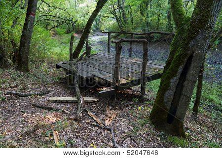 Swamp in National Park Lunca Muresului, Arad, Romania