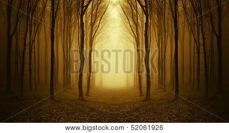 path through a golden forest in autumn at sunrise with fog and warm light