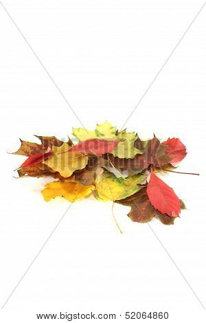 Decorative Autumn Foliage