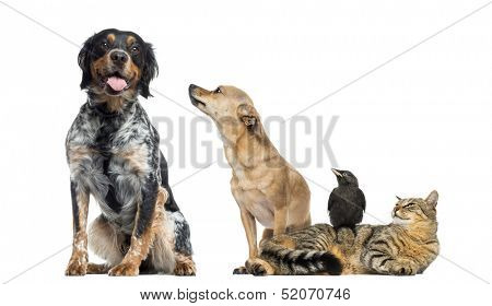 Group of pets, isolated on white