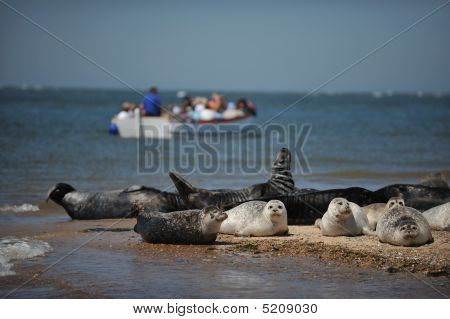 Seal Trip