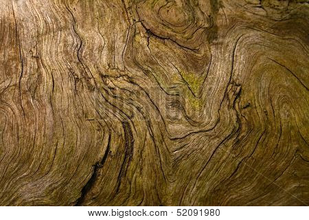 Wooden texture of a very old tree root