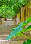 picture of pergola  - A flight of steps with a green pergola in northern Italy - JPG