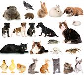 stock photo of pussy  - Collage of different cute animals - JPG
