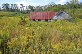 Shack in the Goldenrod