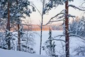 Winter Forest And Lake At The Sunset